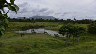 tropische Bergwelt