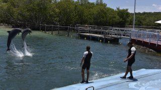Delfinshow in Rancho Luna