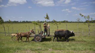 Landarbeit